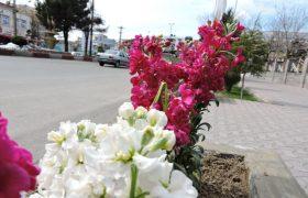 عزم شهرداری ایلخچی جهت ساماندهی و بهسازی فضاهای سبز/گزارش تصویری