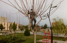 هرس و شاخه زنی درختان سطح شهر توسط واحد خدمات شهری شهرداری_ایلخچی