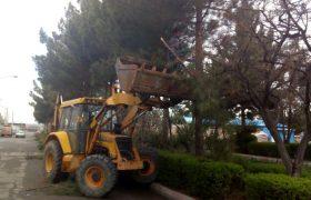 تداوم عملیات هرس و بازپیرایی درختان سطح شهر