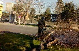 🌳رفع خطر درختان خشک و خطر ساز سطح شهر/#ارتقای- امنیت- معابر- شهری
