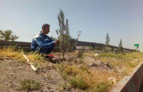 قیوم زنی درختان سطح شهر ایلخچی