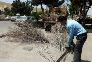 🌳رفع خطر درختان خشک و خطر ساز سطح شهر