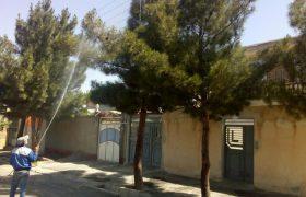 🛎تداوم عملیات سمپاشی و مبارزه با آفت درختان و فضای سبزسطح شهر ایلخچی