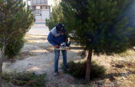 عملیات فرم دهی و حذف شاخه های خشک، خطر ساز و آفت زده درختان سطح شهر ایلخچی