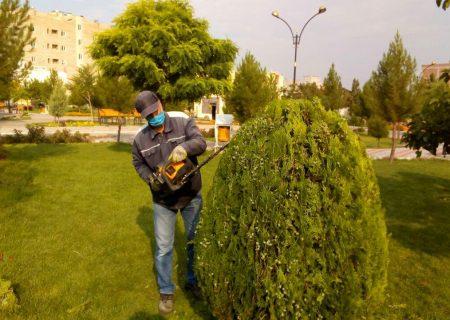 🔔تداوم عملیات هرس تابستانه (هرس سبز ) گیاهان فضای سبز شهری در ایلخچی
