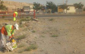 📣📣پاکسازی مبادی ورودی و خروجی شهر ایلخچی