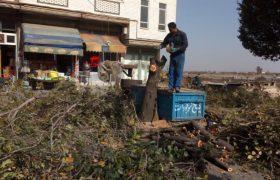 #تداوم عملیات رفع خطر درختان خشک و آفت زده فضای سبز شهری