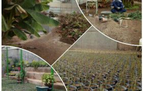 🍀 بذرگیری و قلمه گیری درختان، درختچه ها و گلهای فصلی